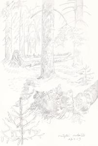 Mölylän metsää