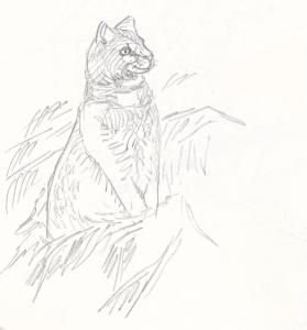 Kermanvärinen kissa pelon reunassa