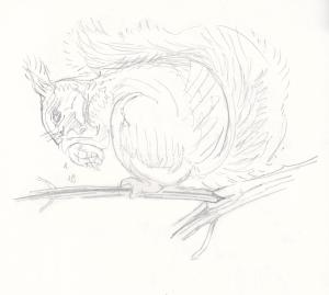 Orava ja käpy