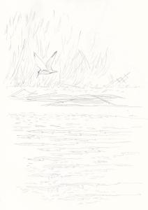Pikkutiira Purolahdella