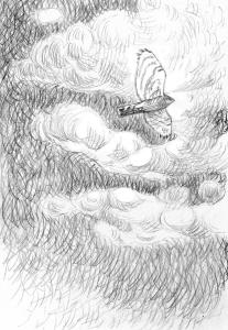Varpushaukka poutapäivänä