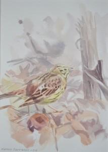 Keltasirkkukoiras keväällä
