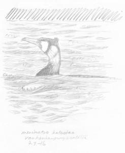Merimetso Vanhankaupunginselällä, 7.4.2016