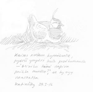 Töyhtöhyyppäkoiras soitimella, Kotiniitty 29.3.2016