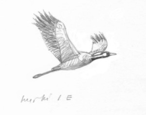 Kurki lentää, Fastholma 4.4.2016