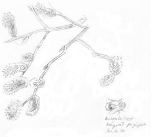 pajujen kukkia ja kimalainen, 14.4.2016