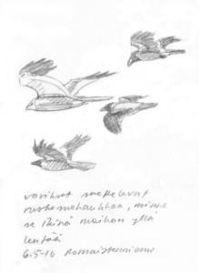 ruskosuohaukka ja varikset, 6. toukokuuta