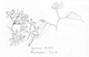 syreeni kukkii