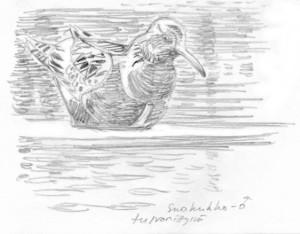 suokukkokoiras tulvaniityllä, 11.5.2016