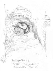 kapytikka-tekee-yopymiskoloa