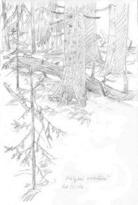 molylan-metsasta